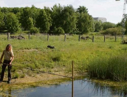 Amphibien in Gefahr