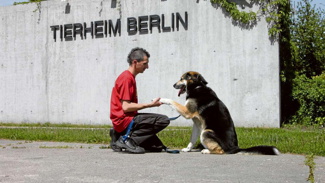 katzen vemittlung berlin